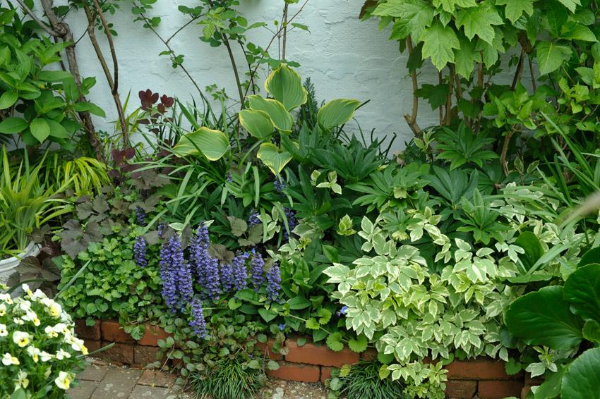 アジュガの咲く4月の裏庭