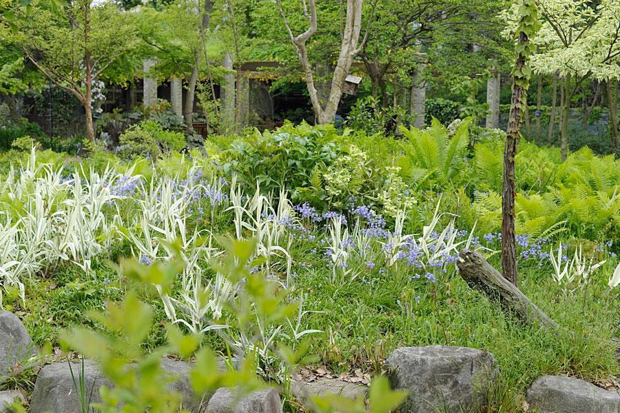 クサソテツをバックに咲く春の花-シーズンズ