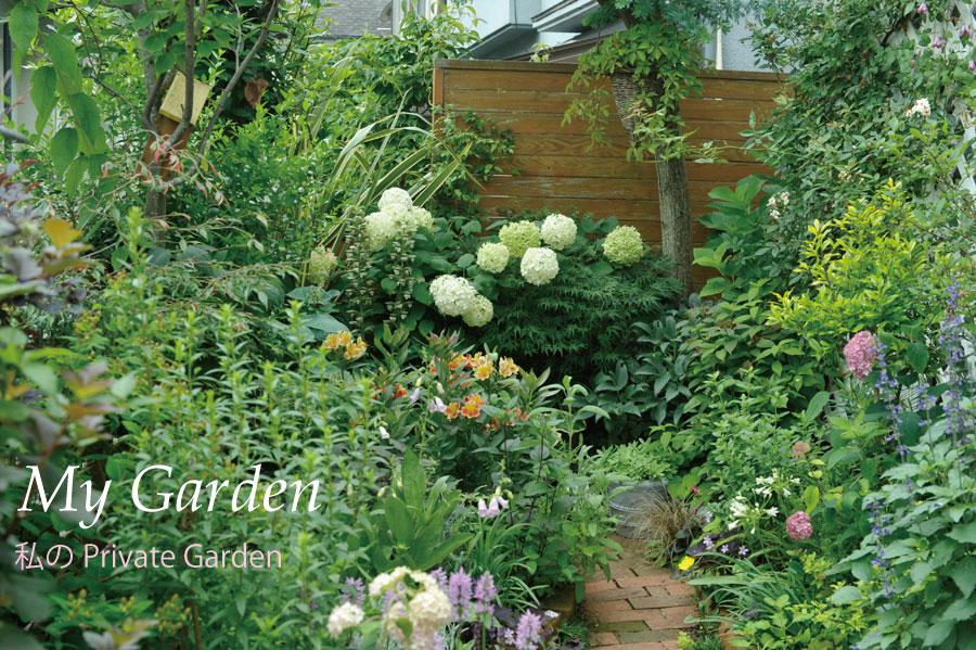 アナベルやアルストロメリアが咲く6月の裏庭