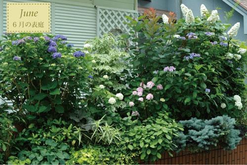 いろんなアジサイが咲く6月の表庭