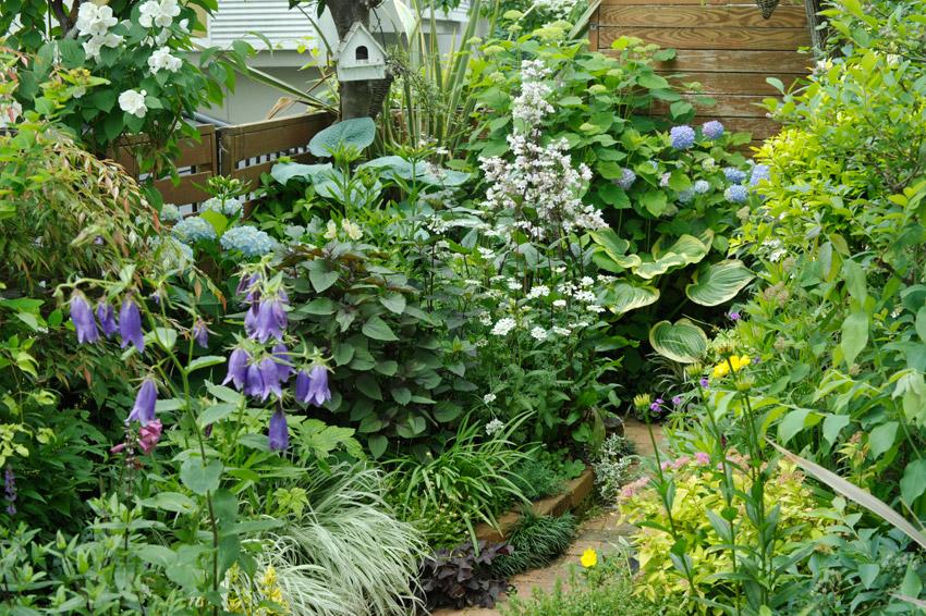 ペンステモンハスカーレッドが咲く6月の裏庭