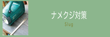ナメクジ対策 Slug