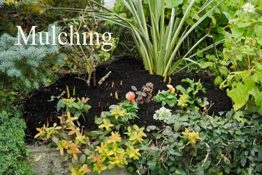 腐葉土を敷き詰めた冬の花壇
