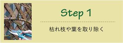 Step1 枯れ枝やはを取り除く