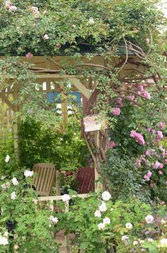 松尾園芸のバラの庭