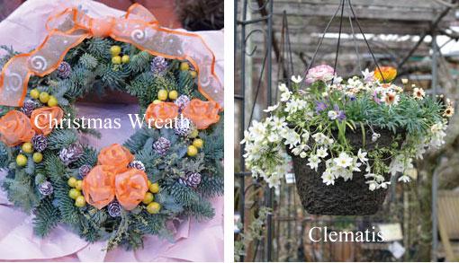Christmas Wreath Hanging basket of Clematis
