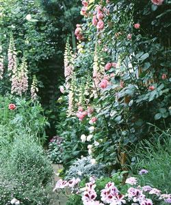 5月のMy Garden
