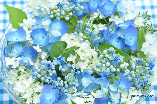 アナベルと青い西洋アジサイ、そしてアジサイ '碧の瞳'  の生花のアレンジ-ガーデンフラワーカレンダーより
