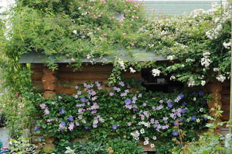 クレマチスの咲く松尾園芸の庭