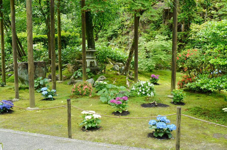 私がデザインした、京都東山、新善行寺の一年目のアジサイの表庭