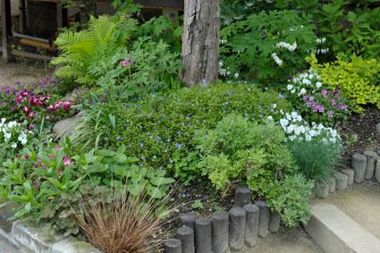坂の花壇の左側